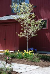 Every bush and tree installed either flowers or has remarkable color.