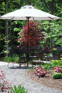 The red Japanese maple makes a lovely backdrop to the patio furniture.