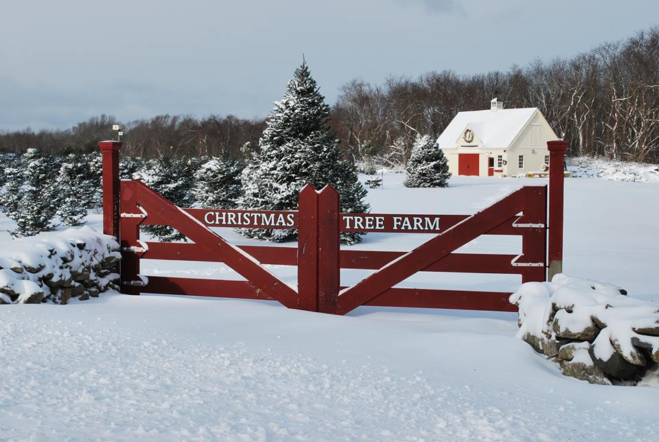 Gated entrance to post and beam Christmas Tree Barn